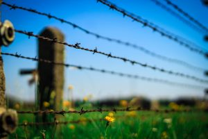 Fence with barb wire